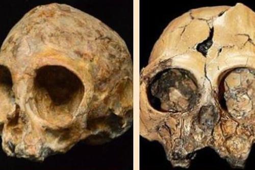 200万年前的人类始祖的头骨被发现 为人类进化打开了新视角